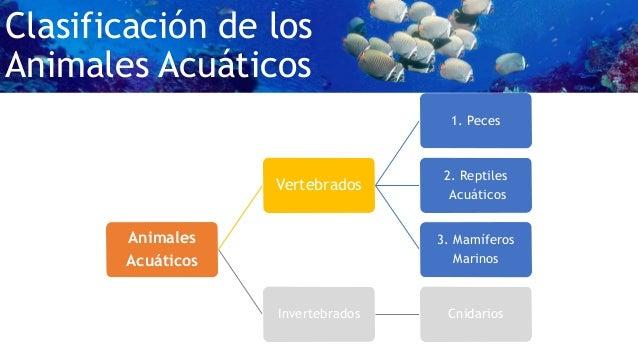 Animales vertebrados acuaticos for Como se cultivan los peces