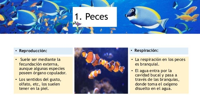 Animales vertebrados acuaticos for La reproduccion de los peces