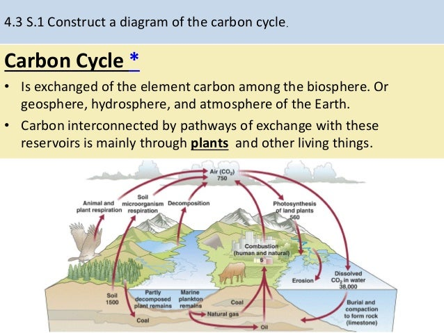 The carbon cycle diagram of a complete complete wiring diagrams 4 3 carbon cycle rh slideshare net carbon oxygen cycle diagram simple carbon cycle diagram to label ccuart Choice Image