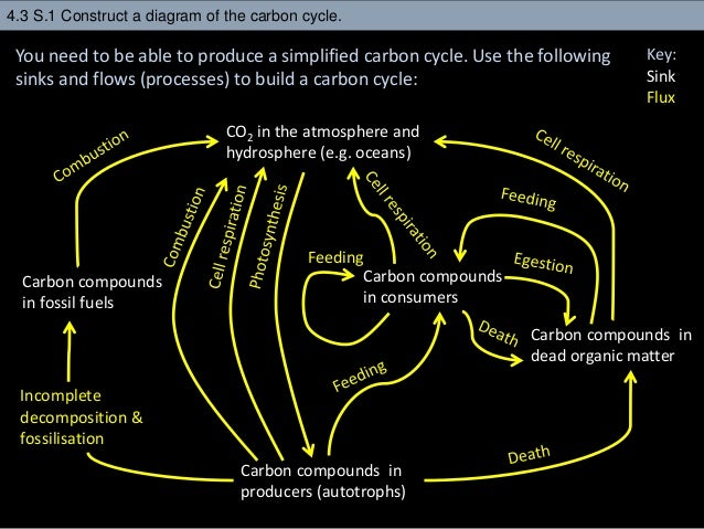 4 3 Carbon Cycle