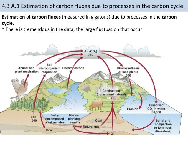 Rock carbon cycle diagram diy enthusiasts wiring diagrams 4 3 carbon cycle rh slideshare net carbon cycle steps simple carbon cycle diagram ccuart Choice Image