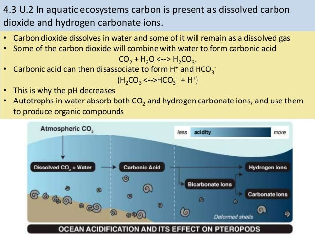 43 carbon cycle and cycles on a local scale 8 ccuart Choice Image