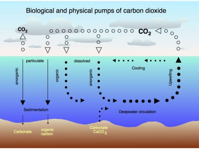 43 carbon cycle produce organic compounds 9 ccuart Choice Image