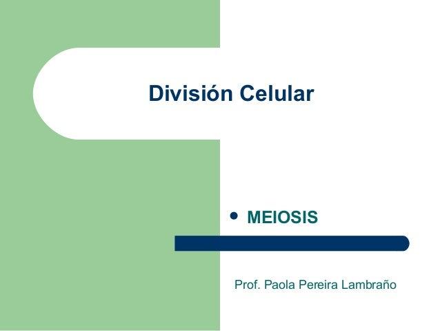 División Celular  MEIOSIS Prof. Paola Pereira Lambraño