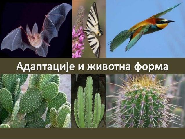 Наставник: Тања Јовановић Адаптације и животна форма