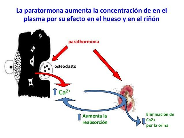 4. paratohormona metabolismo del calcio y el fosfato