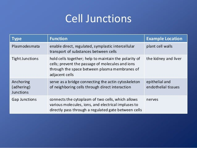 4  Cell Structure And Function