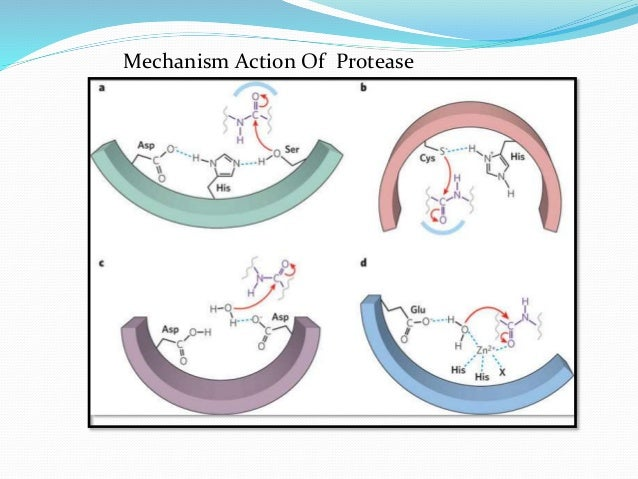 use of proteinase inhibitors as insecticides 4 jasmonic acid activates the production of at least 15 new gene products including proteinase inhibitors  this allows plants to build potent concentrations of insecticides in tissues that are in danger of attack.
