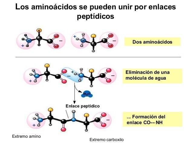 Otras reacciones • Prolinaehidroxiprolina,producencoloramarillocon ninhidrina. • REACCIONCONDINITROFLUOROBENCENO....