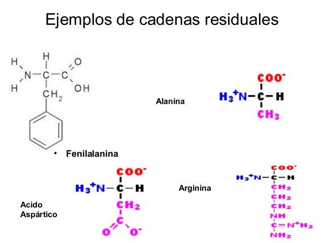 Alanina Acido Aspártico Arginina Ejemplos de cadenas residuales • Fenilalanina