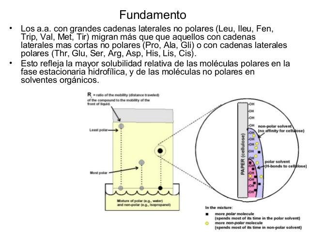 Electroforesis Cuando una mezcla de moléculas ionizadas y con carga neta son colocadas en un campo eléctrico, estas experi...