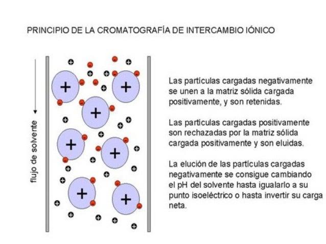 Determinación de la composición de los aminoácidos. En el analizador de aminoácidos, el hidrolizado pasa a través de una c...