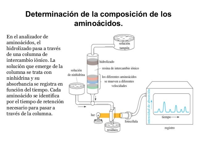 4.  aminoacidos