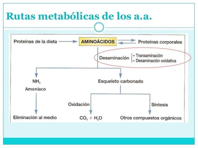 Descubra ahora qué tiene que hacer para quick Metabolismo y nutricion