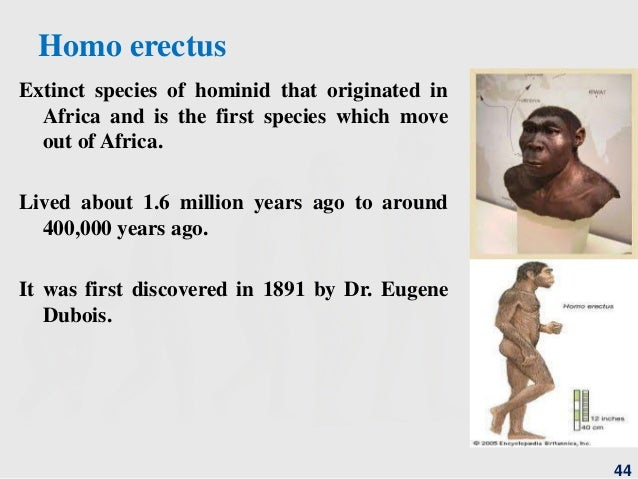 stages of human evolution pdf