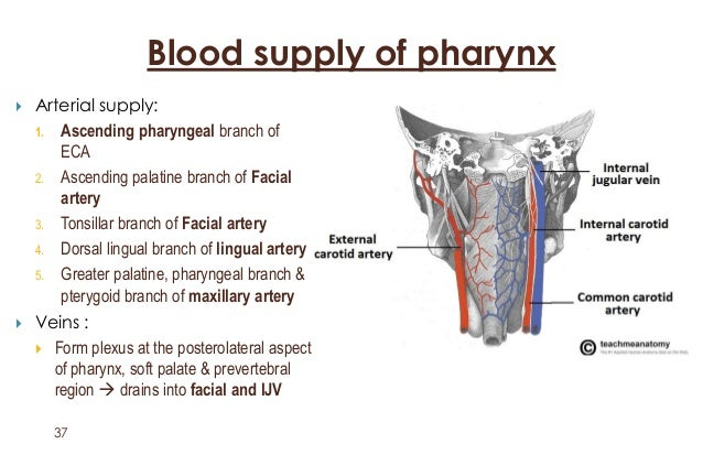 Image result for pharynx blood supply