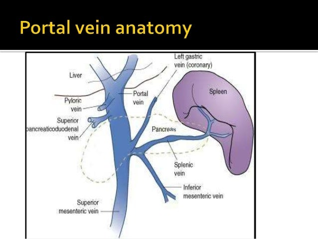 Variceal Haemorrhage With Special Attention To Portal Hypertension