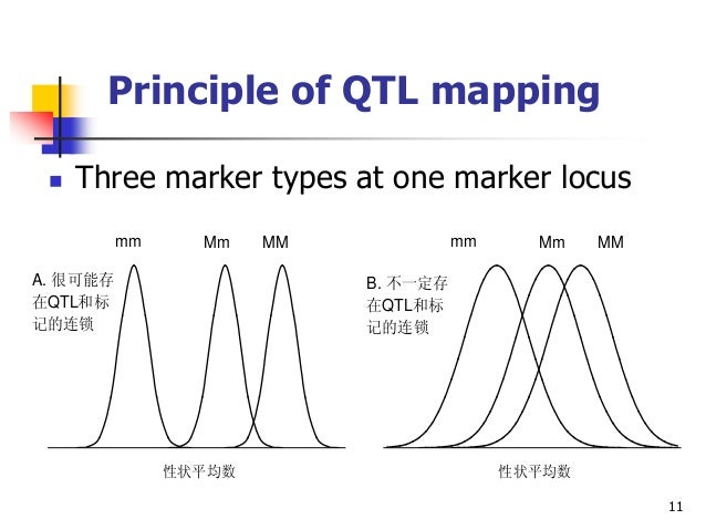 Jiankang Wang. Principle of QTL mapping and inclusive ... on marker assisted selection, gene mapping, copy-number variation, test cross, quantitative genetics, genetic linkage, dihybrid cross,