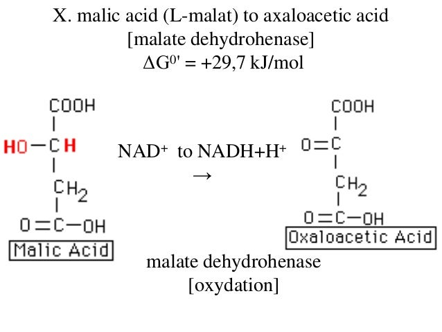 Oxaloacetic Acid Decarboxylation Carbohydrates &...