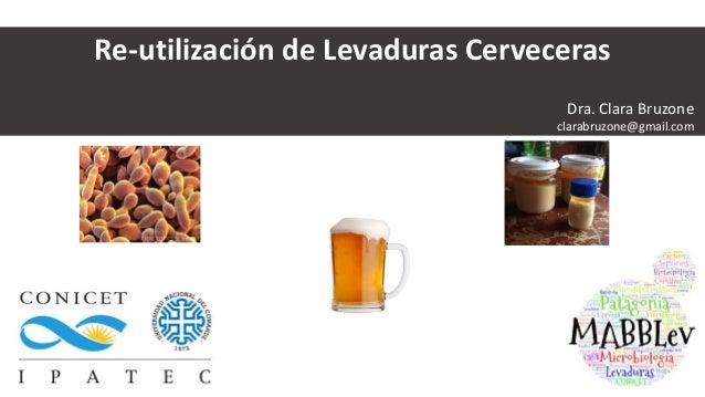 Re-utilización de Levaduras Cerveceras Dra. Clara Bruzone clarabruzone@gmail.com