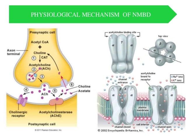 Neuromuscular blockade & Reversal agents & Monitoring   Slide 3