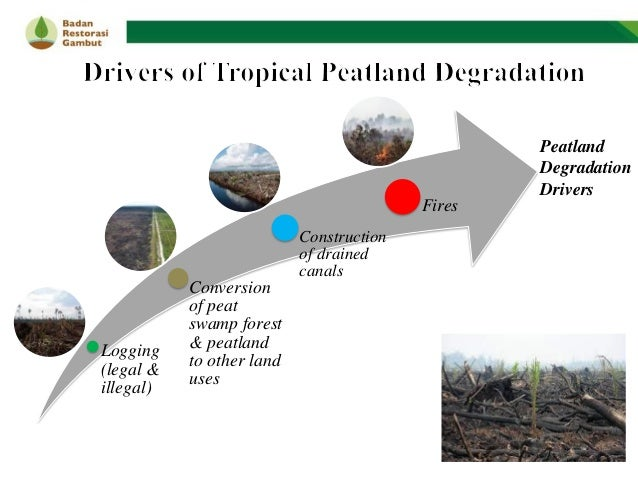 Best Practices on Indonesia's Peatland Management: Lesson Learnt, Opportunities & Challenges - BRG Slide 3