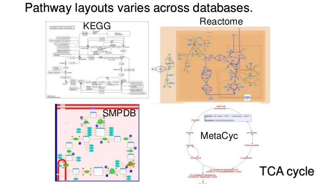 Metabolic pathway mapping against KEGG, Reactome, HMDB and CPDB