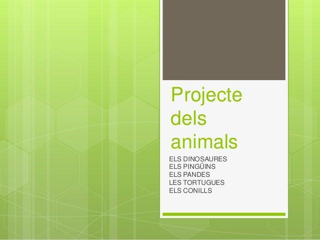 Projecte dels animals ELS DINOSAURES ELS PING�INS ELS PANDES LES TORTUGUES ELS CONILLS