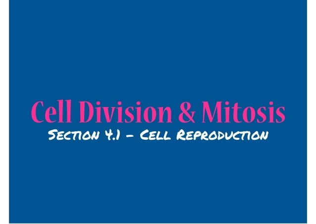 Cell Division & Mitosis Section 4.1 - Cell Reproduction