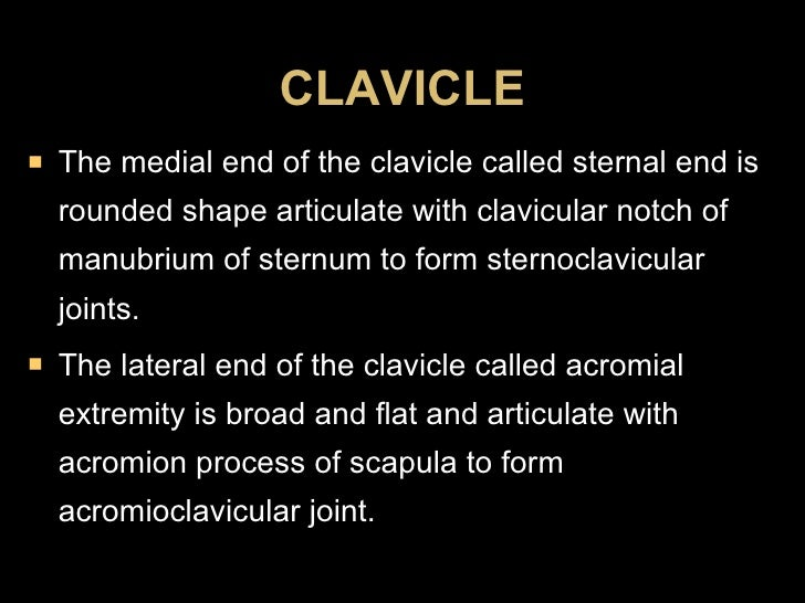 <ul><li>The medial end of the clavicle called sternal end is rounded shape articulate with clavicular notch of manubrium o...