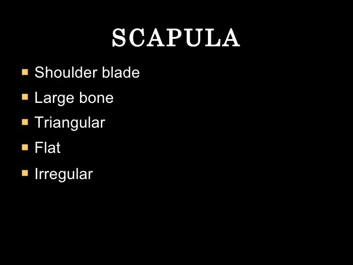 SCAPULA <ul><li>Shoulder blade </li></ul><ul><li>Large bone </li></ul><ul><li>Triangular </li></ul><ul><li>Flat  </li></ul...