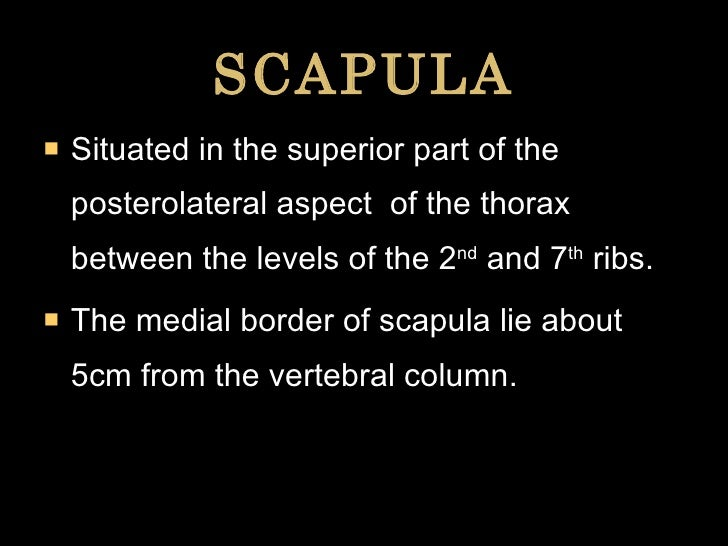 SCAPULA <ul><li>Situated in the superior part of the posterolateral aspect  of the thorax between the levels of the 2 nd  ...