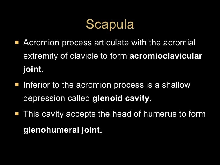 <ul><li>Acromion process articulate with the acromial extremity of clavicle to form  acromioclavicular joint . </li></ul><...