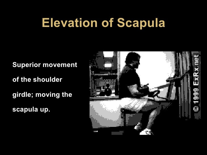 Elevation of Scapula Superior movement of the shoulder girdle; moving the scapula up.