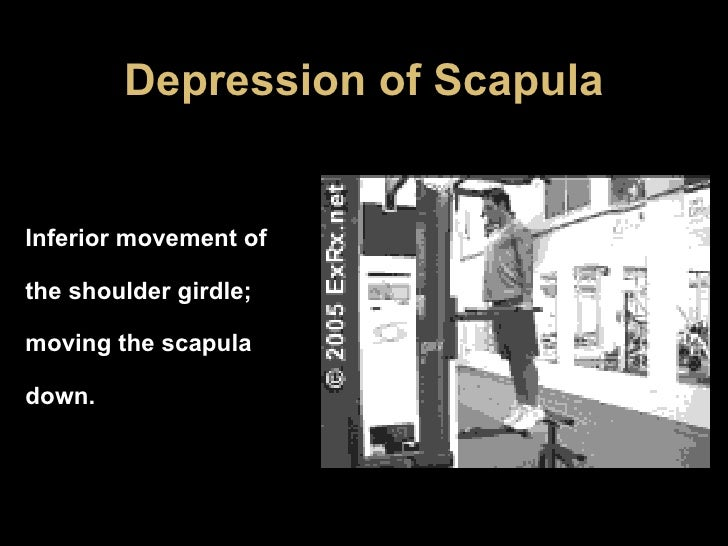 Depression of Scapula Inferior movement of the shoulder girdle; moving the scapula down.