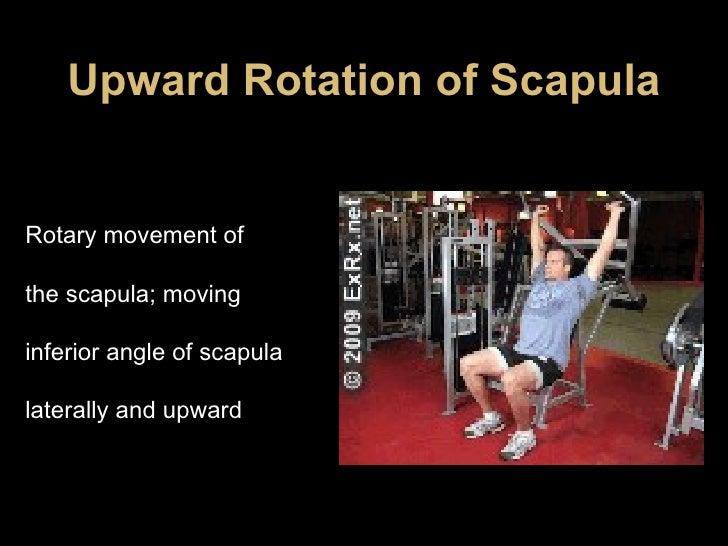 Upward Rotation of Scapula Rotary movement of the scapula; moving inferior angle of scapula laterally and upward