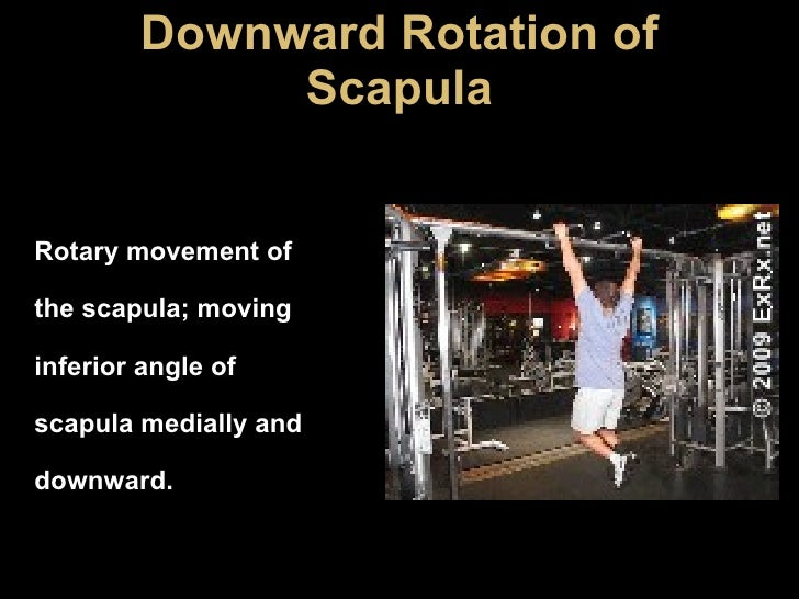 Downward Rotation of Scapula Rotary movement of the scapula; moving inferior angle of scapula medially and downward.