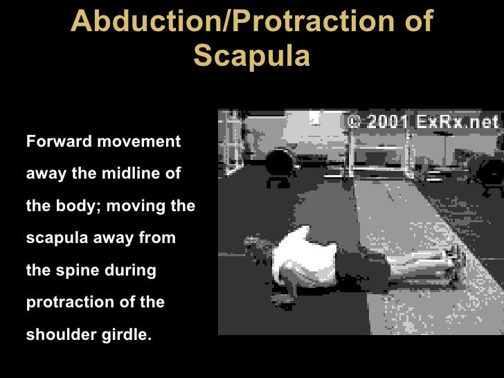 Abduction/Protraction of Scapula Forward movement away the midline of the body; moving the scapula away from the spine dur...