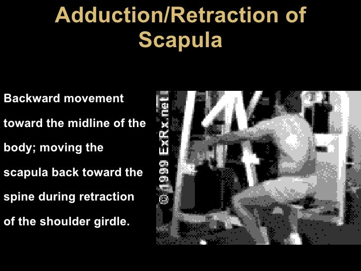 Adduction/Retraction of Scapula Backward movement toward the midline of the body; moving the scapula back toward the spine...