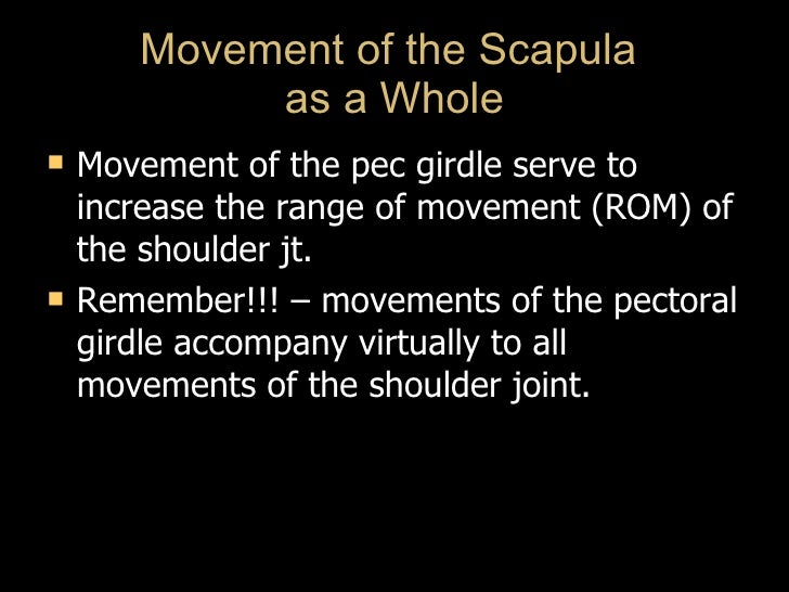 Movement of the Scapula  as a Whole <ul><li>Movement of the pec girdle serve to increase the range of movement (ROM) of th...