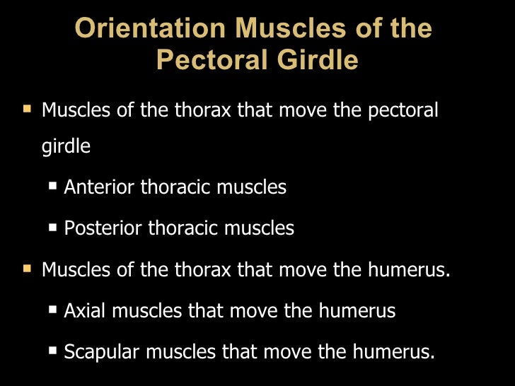 Orientation Muscles of the  Pectoral Girdle <ul><li>Muscles of the thorax that move the pectoral girdle </li></ul><ul><ul>...
