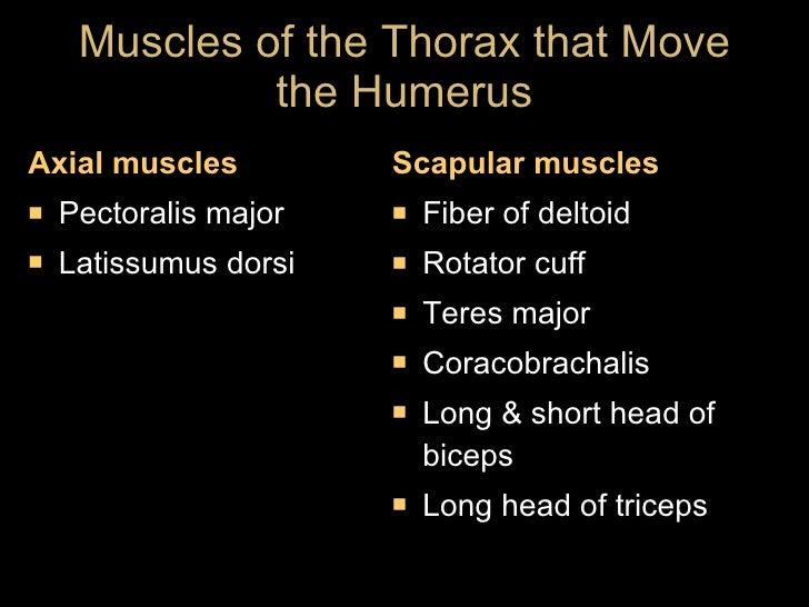 Muscles of the Thorax that Move the Humerus <ul><li>Axial muscles </li></ul><ul><li>Pectoralis major </li></ul><ul><li>Lat...