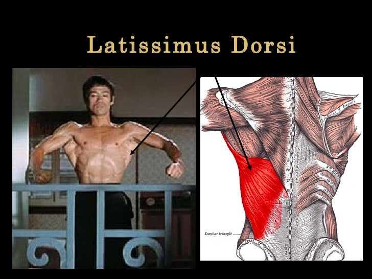 Latissimus Dorsi
