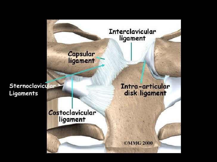 Sternoclavicular Ligaments