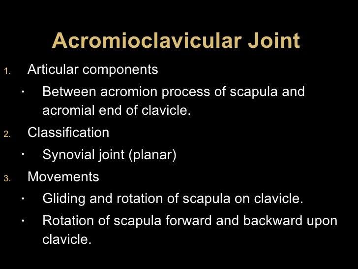 Acromioclavicular Joint <ul><li>Articular components </li></ul><ul><ul><li>Between acromion process of scapula and acromia...