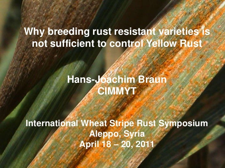 Why breeding rust resistant varieties is  not sufficient to control Yellow Rust