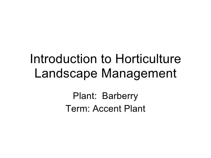 Introduction to Horticulture Landscape Management Plant:  Barberry Term: Accent Plant