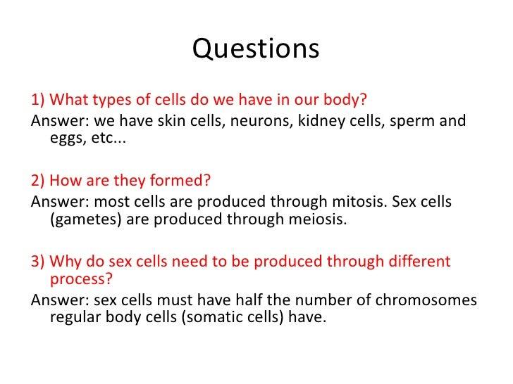 Why do sperm and egg go through meiosis