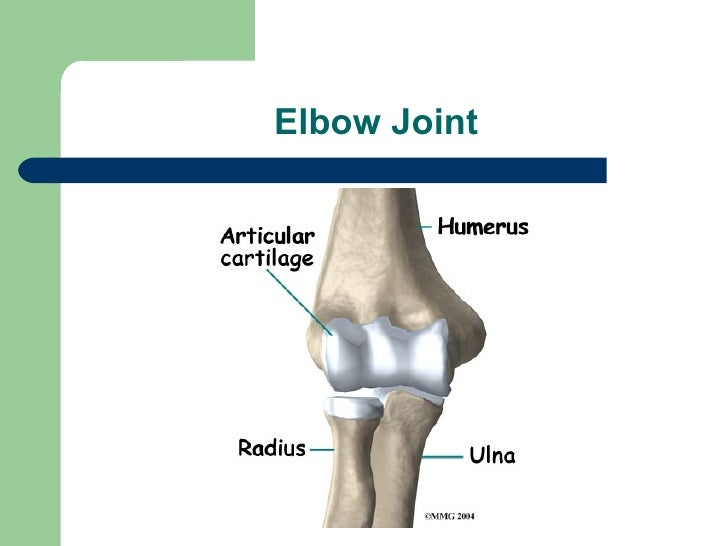 Radius, Ulna, Elbow and Radioulnar Joint