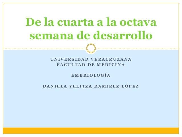 De la cuarta a la octavasemana de desarrollo     UNIVERSIDAD VERACRUZANA       FACULTAD DE MEDICINA           EMBRIOLOGÍA ...
